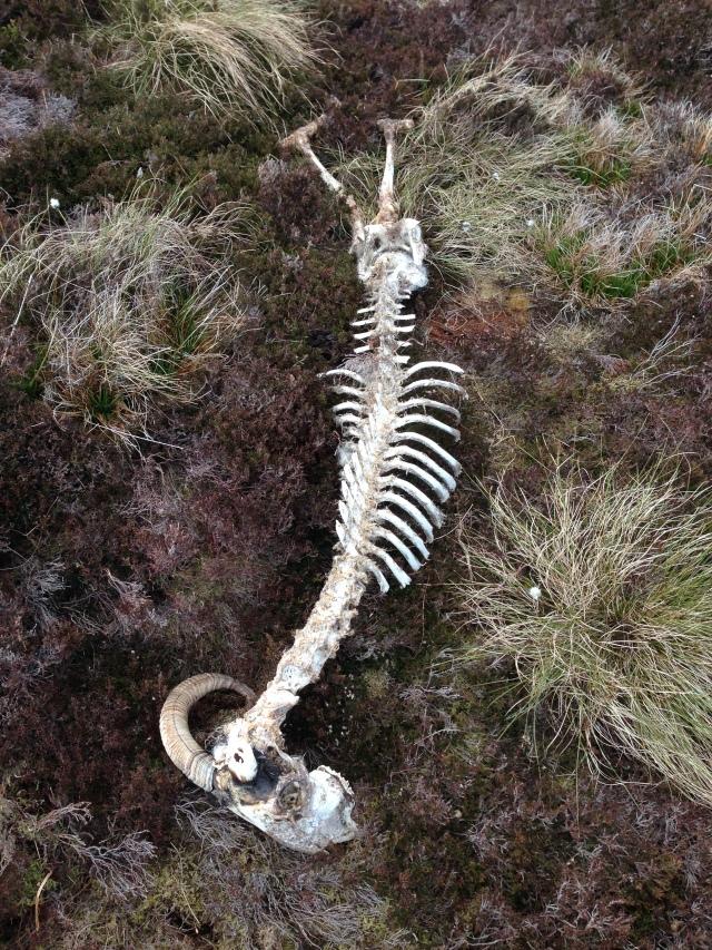 Perfect Skeleton